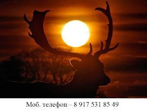 Свет русского языка с самого Севера - от лучших репетиторов России - от Москвы и до Сибири