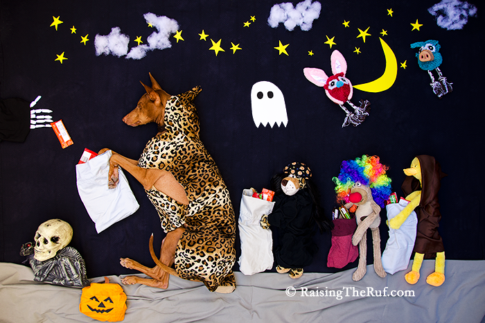 halloween costume dog trick or treating funny dog