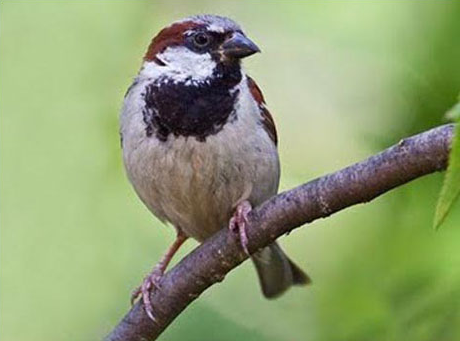 Sparrow for Peace and Progress