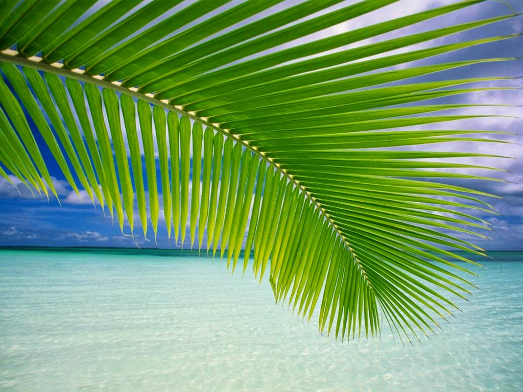 Lá dừa - Thuyết về cây dừa