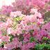 Giúp bạn dẹp bỏ nỗi lo dị ứng phấn hoa