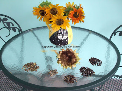 Harvesting Sunflower Seeds from the First Sunflower Head