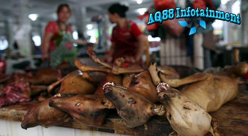 Setiap tahun 10 ribu anjing akan disembelih dan dimakan untuk Perayaan Festival daging anjing di Kota Yulin, China. Festival yang diduga menyiksa anjing ini pun mendapat kecaman dari berbagai kalangan terutama pecinta hewan.