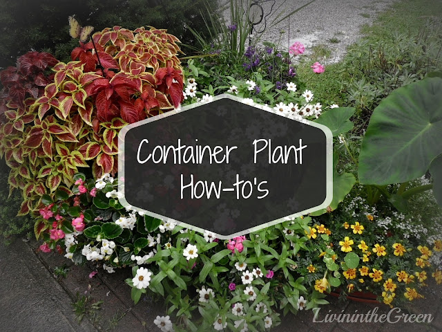 Livin 39 in the green container plant how to 39 s for Garden pods to live in