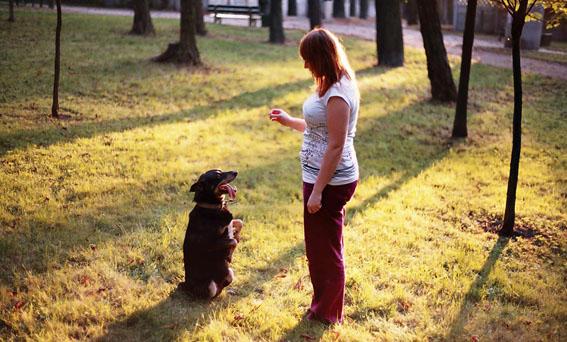 ciasteczka, dla psów, z wątróbki, ciastka, dla psa, przepis, wątróbkowe, prezent, smakołyki, Psie wypieki, DIY, tutorial, psi narkotyk, jak zainteresować psa, pies niejadek,