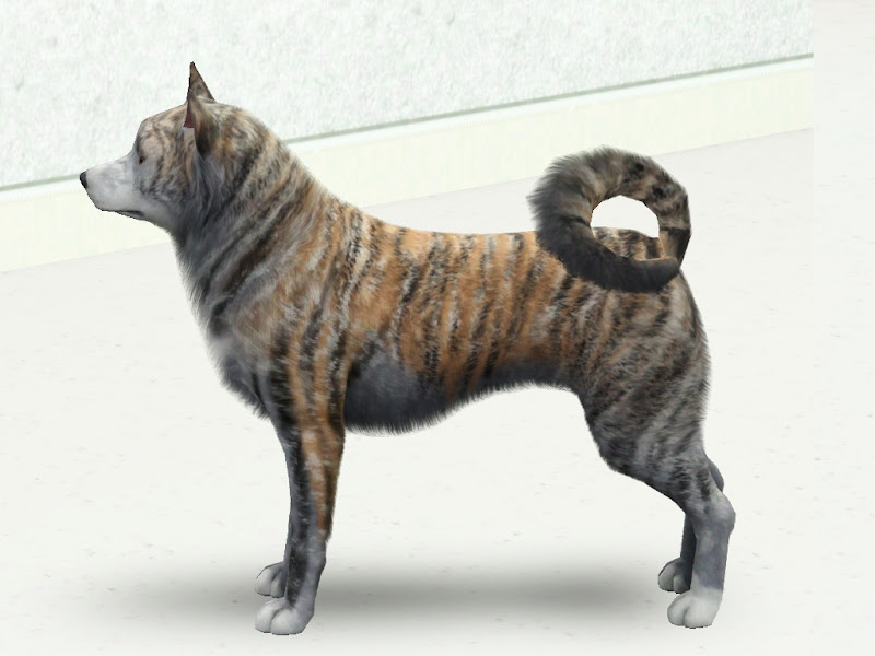 new akita inu breed with 5 colours by zebrafinch title=