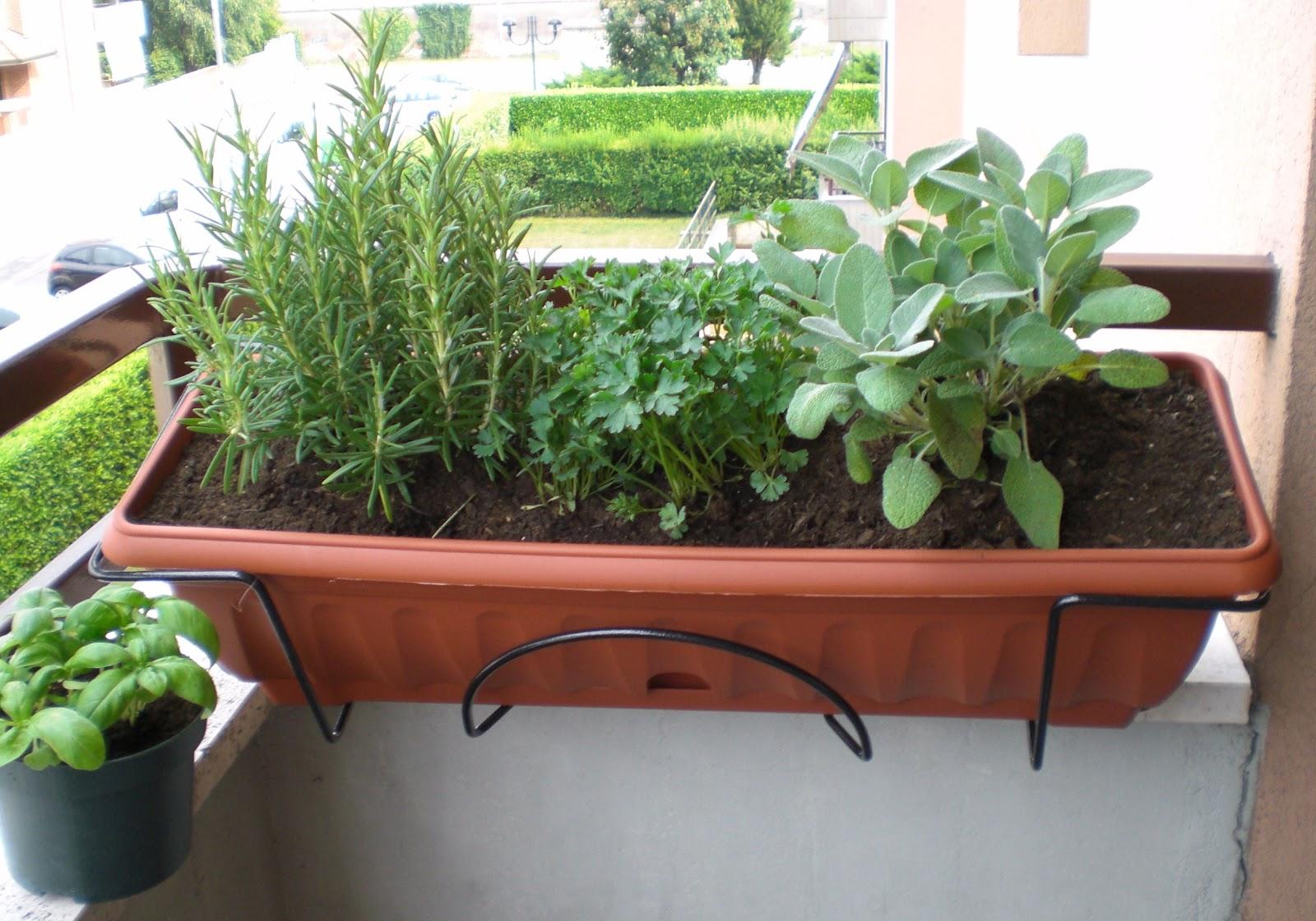 Ecofashion no victims il mio mini orto sul balcone for Erbe aromatiche in vaso