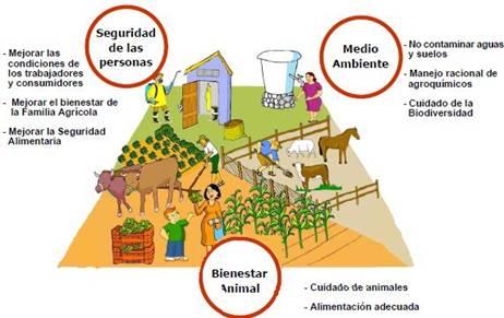 Vivero evergreen buenas practicas forestales en el vivero for Factores para seleccionar el terreno para el vivero