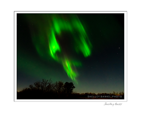 Aurora Man; copyright Shelley Banks, all rights reserved.