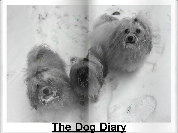 The Dog Diary