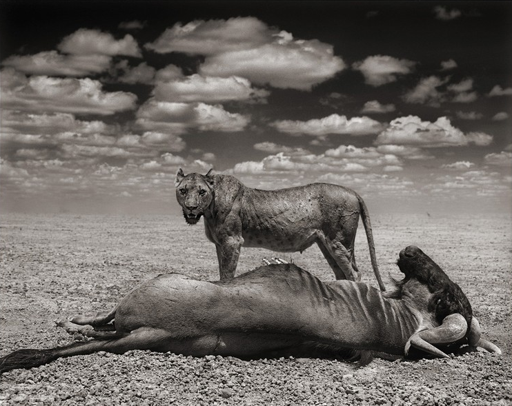 Nick Brandt - Photography