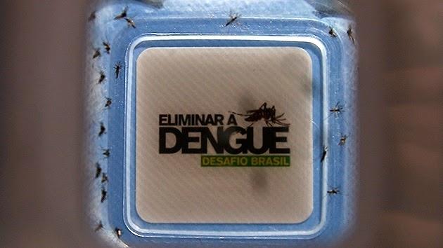 """Sueltan miles de mosquitos """"buenos"""" para combatir el dengue"""