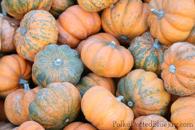 Pumpkin Patch Plaid // LISTERINE® Rinse Made Rad Plaid Bottles // Fall Fashion // Target Sale #RinseMadeRad #CollectiveBias #ad