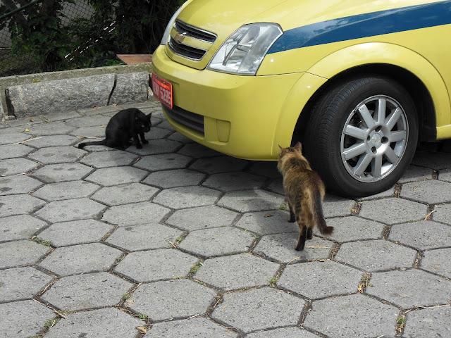 Gatos/ Foto: Marcelo Migliaccio
