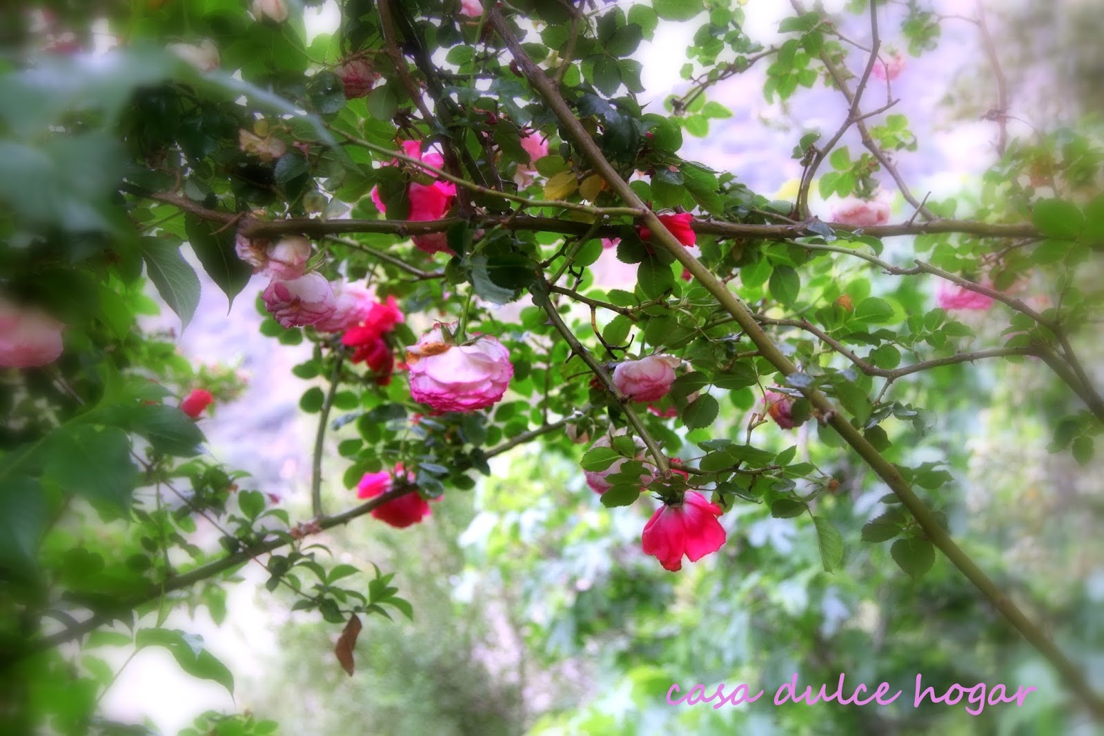 Casa dulce hogar rosas de mi jard n en mi altar for Ahuyentar gatos de mi jardin