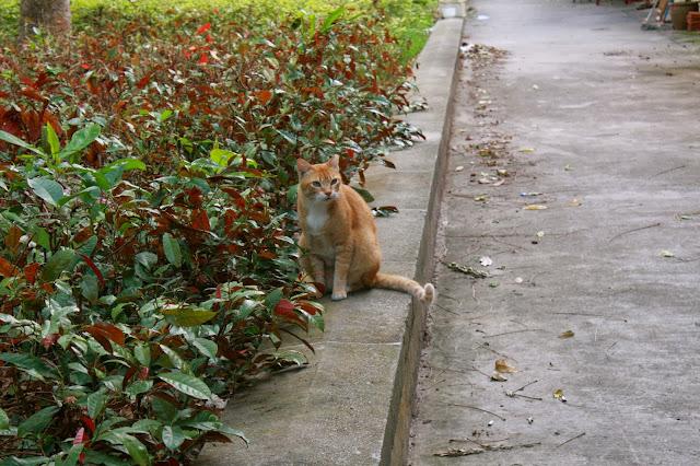 Stray cat Singapore