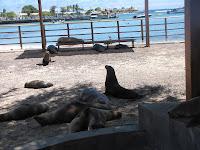 Sea Lion in San Cristobal, Galapagos on the way to Galapagos Eco-Lodge Hotel