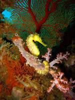 Thailand Divers