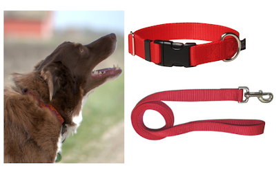 Flat Dog Collar For Strong Puller