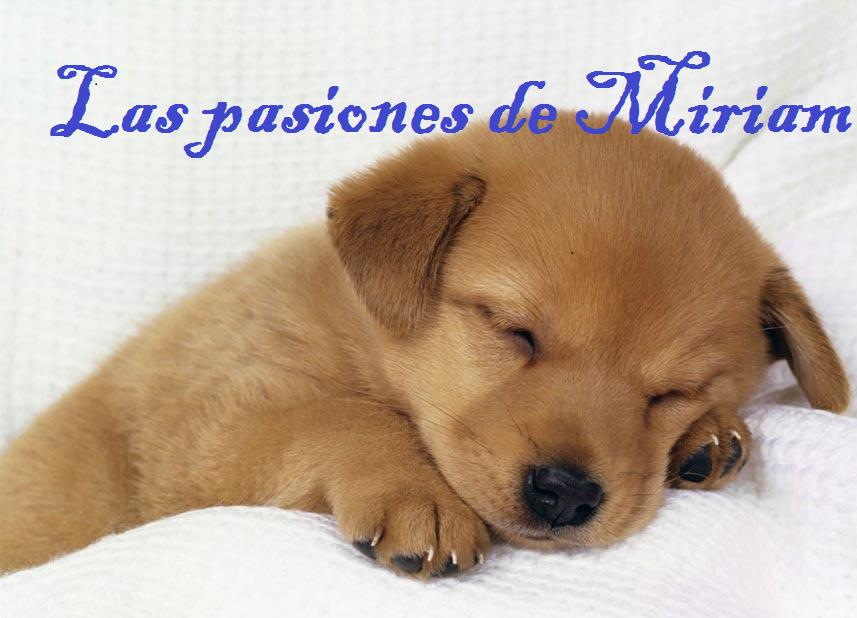 Las pasiones de Miriam