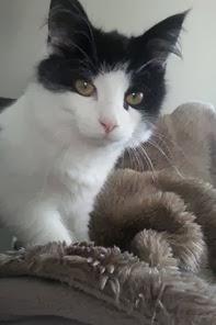 Katten vår