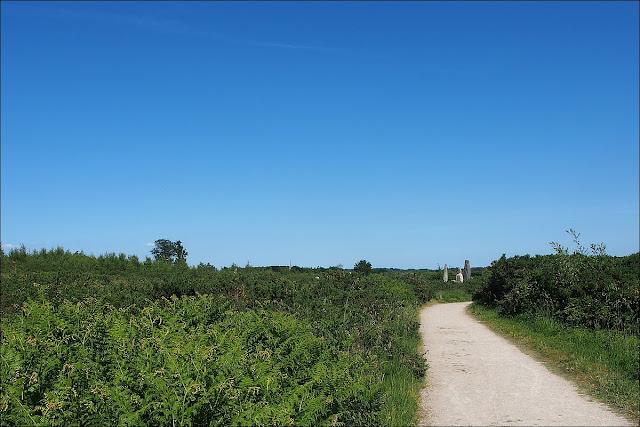 Promenade dans la lande à proximité des  Alignements du Moulin de Cojoux
