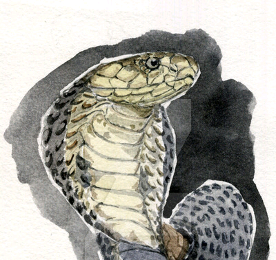 Mơ thấy bắt được con rắn hổ mang đen xám