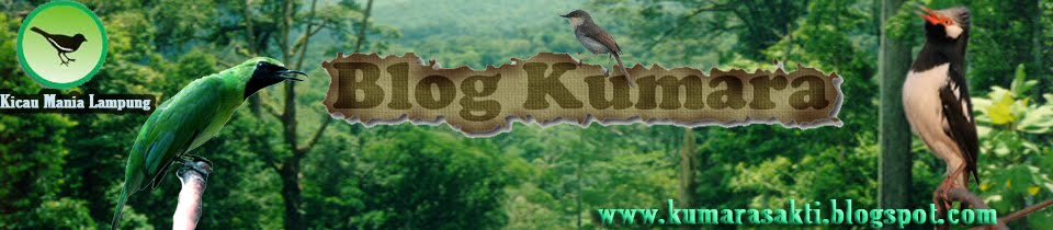 Blog Kumara