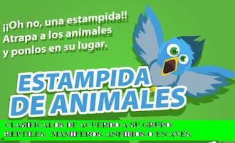 2o, 3o ó 4o CLASIFICA A LOS ANIMALES