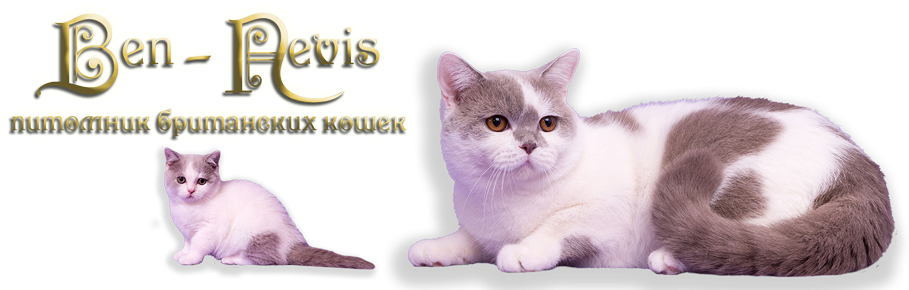 Питомник британских кошек Ben-Nevis