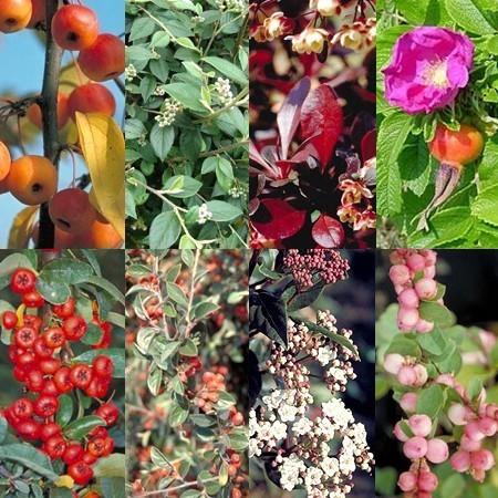 Bons plans jardinage que faut il planter en fin d automne for Jardin que planter en novembre