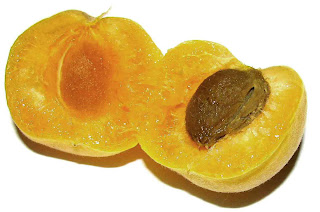 benefits_of_eating_apricots_fruits-vegetables-benefits.blogspot.com(8)