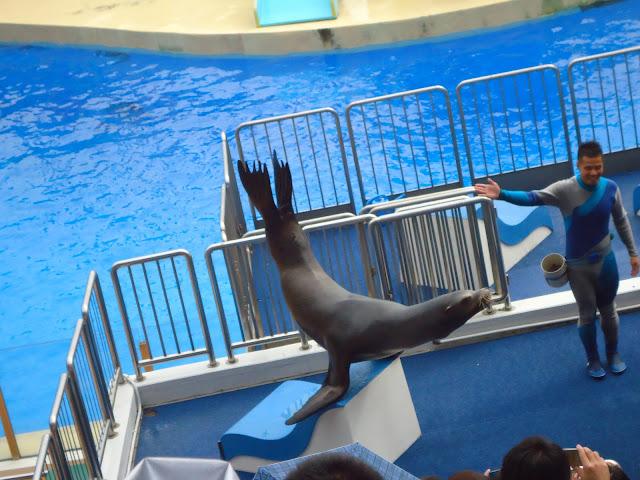 seals at Ocean Park Hong kong
