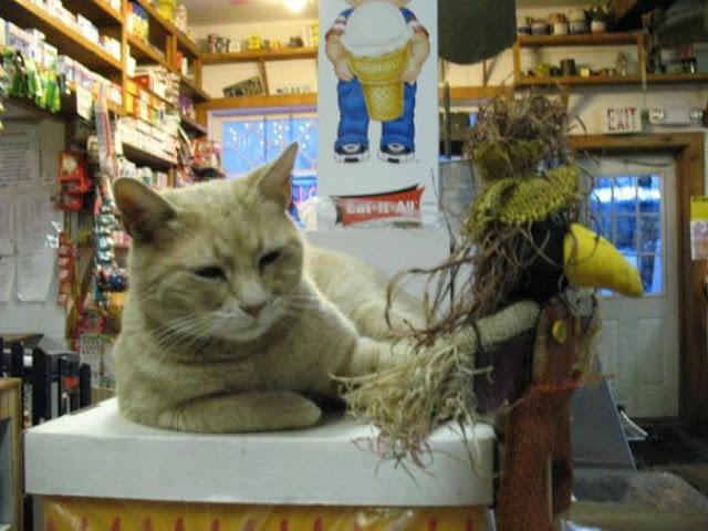 Stubbs is a cat and a mayor of Talkeetna, mayor stubbs, cat mayor, mayor of talkeetna