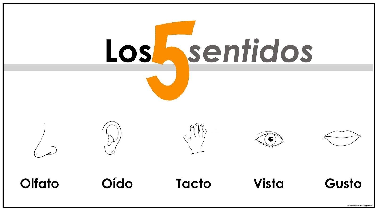 LAMINAS EDUCATIVAS: LOS 5 SENTIDOS
