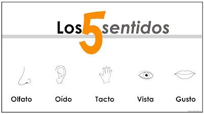 Los 5 sentidos del hombre