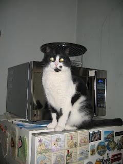 Кошка наблюдает за подготовкой к ремонту