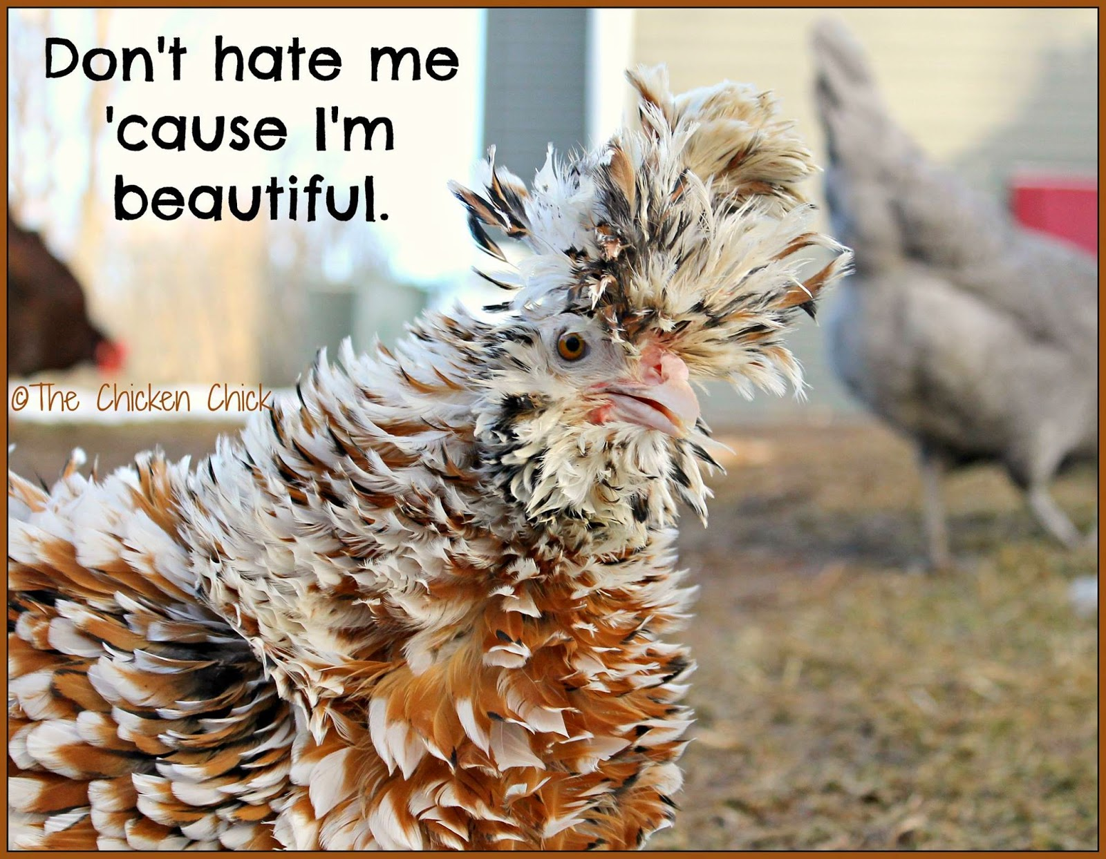 Don't hate me 'cause I'm beautiful.