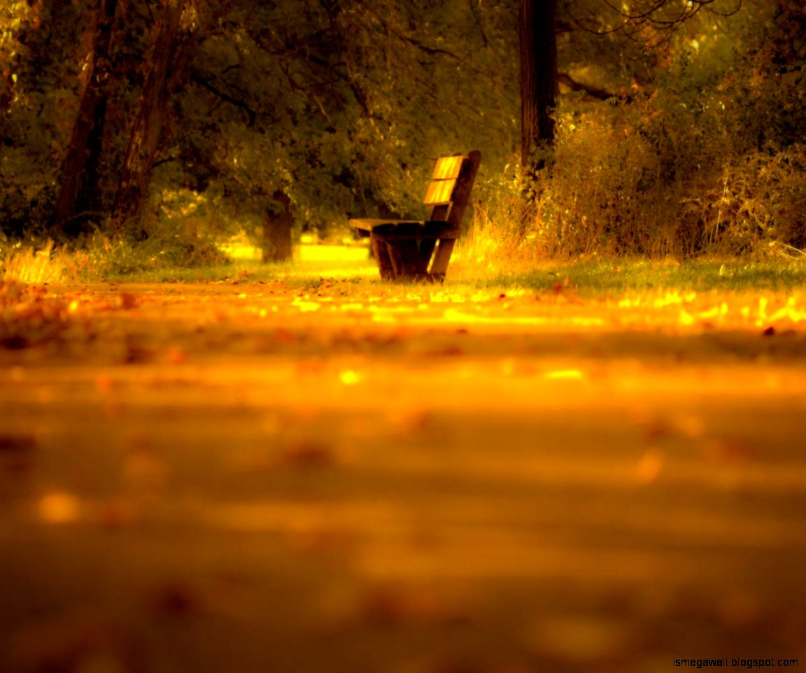 Nature Lonely Bench Wallpaper Mega Wallpapers