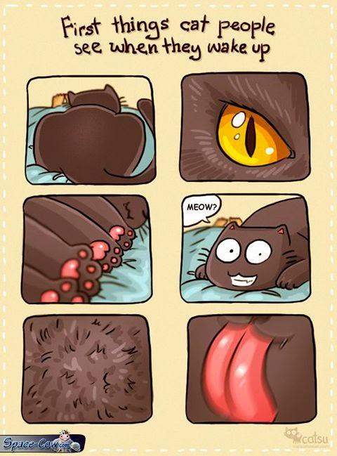funny comics cats pics