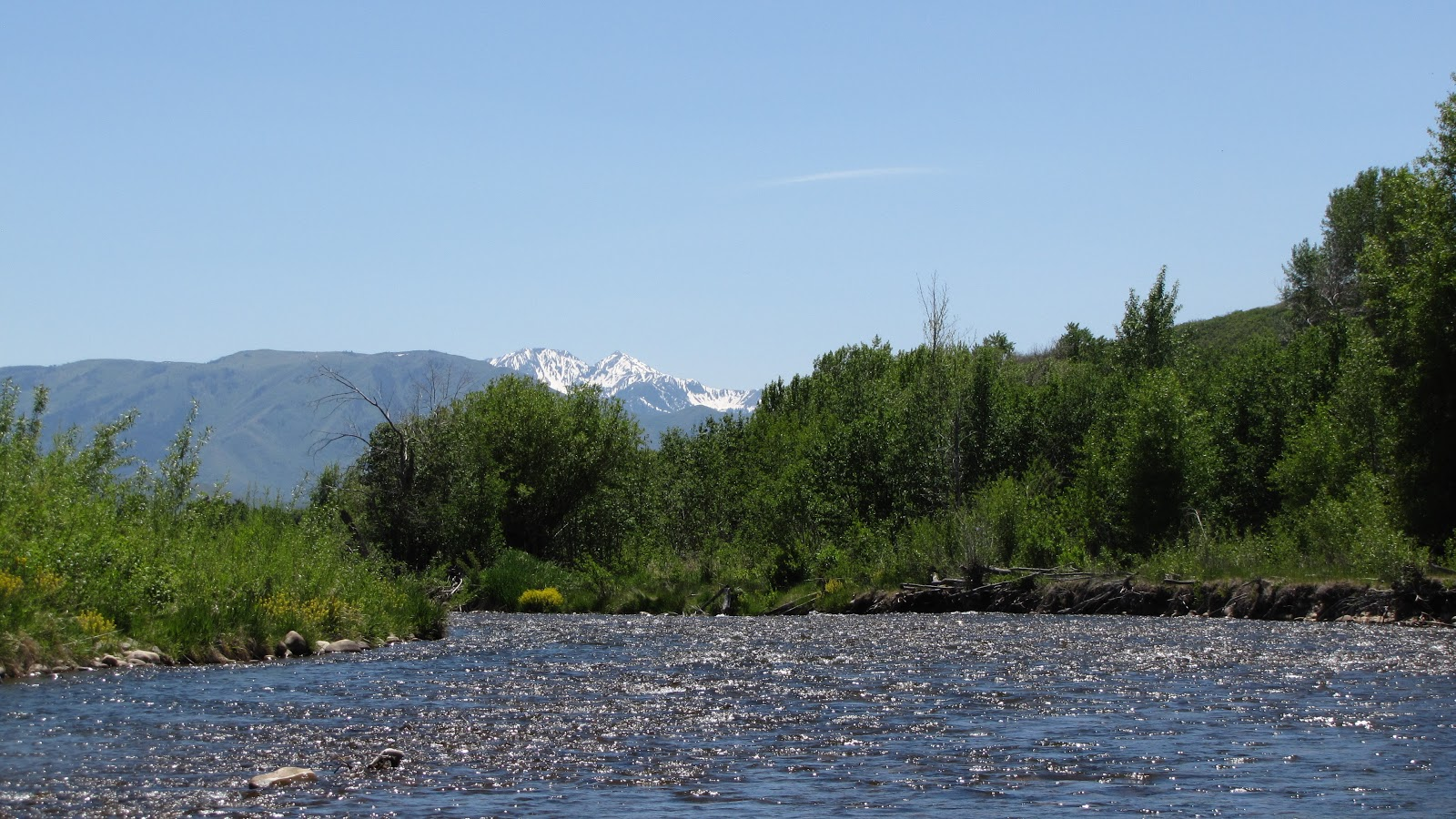 Provo river fly guy year round fishing blog middle provo for Provo river fishing report