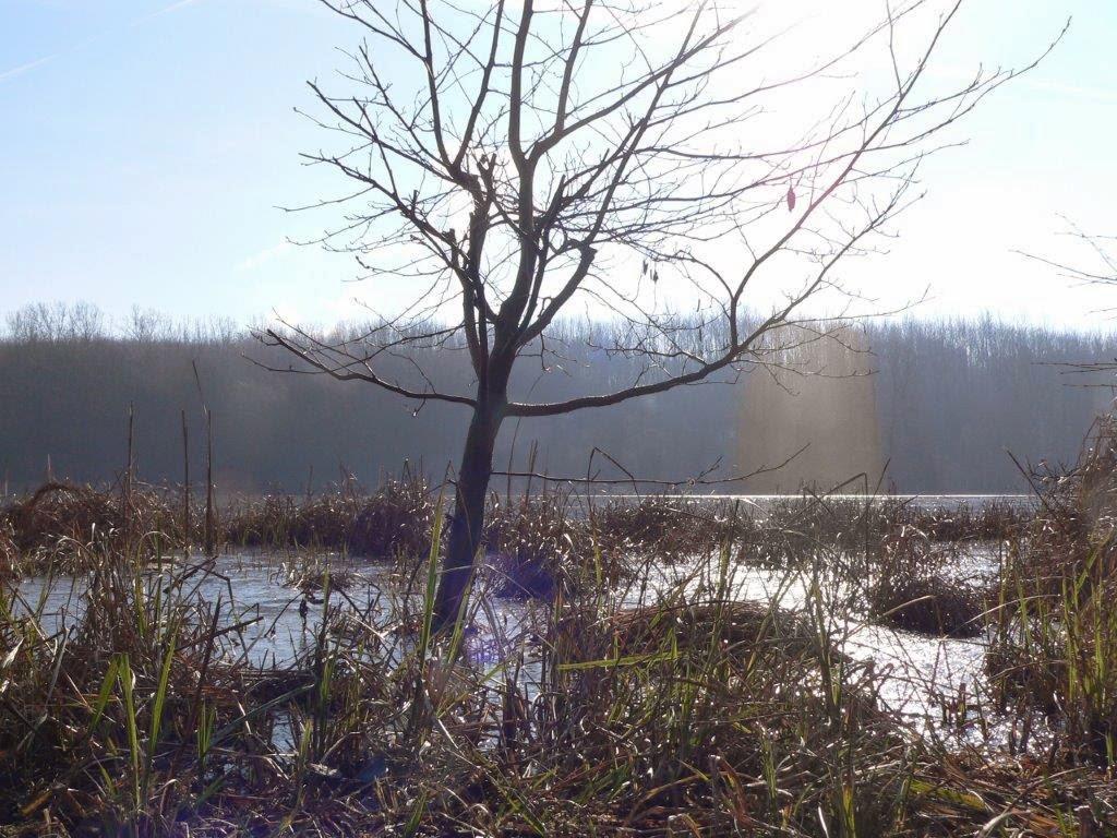 Naturpark Rheinland Hunderunde Köln Sonne Winter Spazierengehen Wandern See