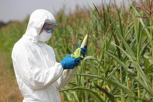Ο μασονικός Ευρωπαϊκός Οργανισμός Χημικών Προϊόντων: Έδωσε συγχωροχάρτι στη Monsanto για το ζιζανιοκτόνο!