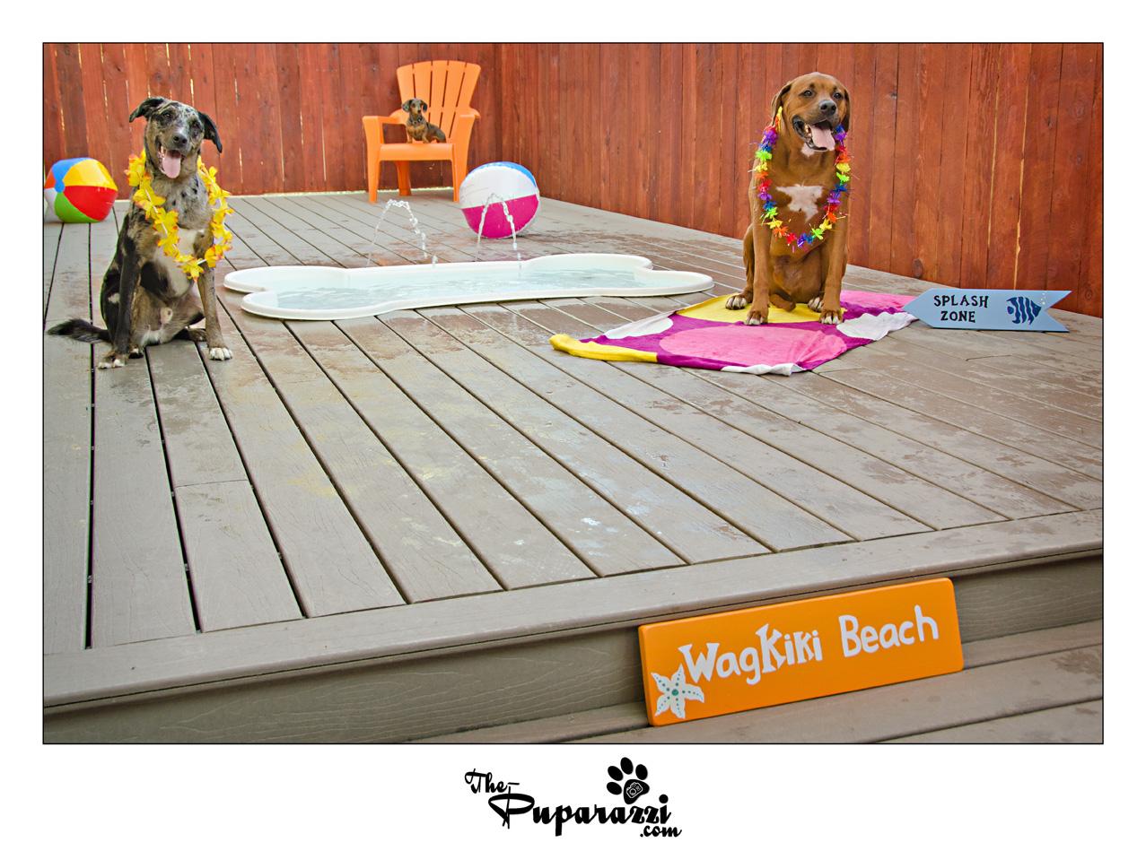 Photoshoot For Wag Hotel Sacramento Wagkiki Beach