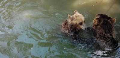 Urși la Zoo Craiova