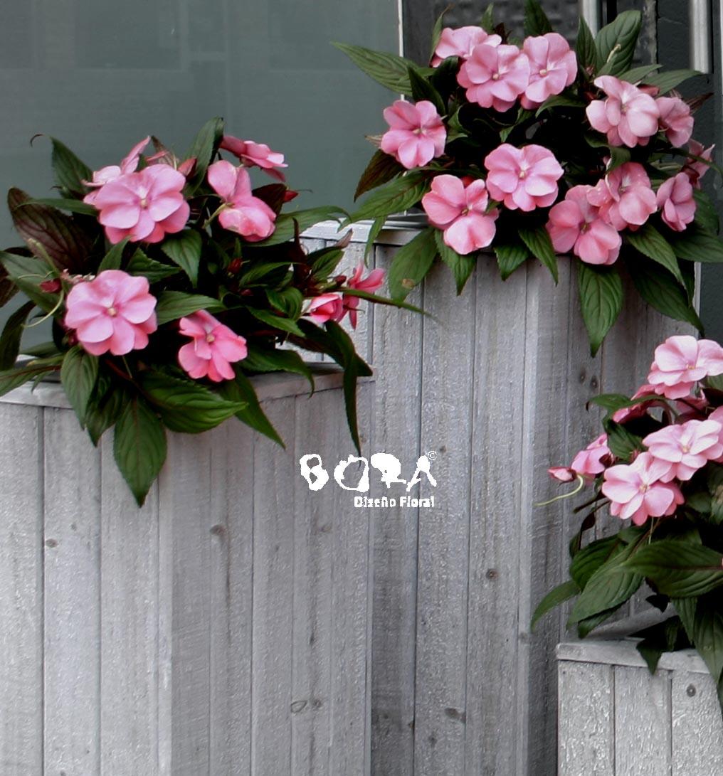 planta flor jardín