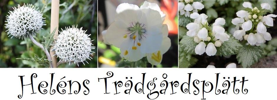 Heléns Trädgårdsplätt