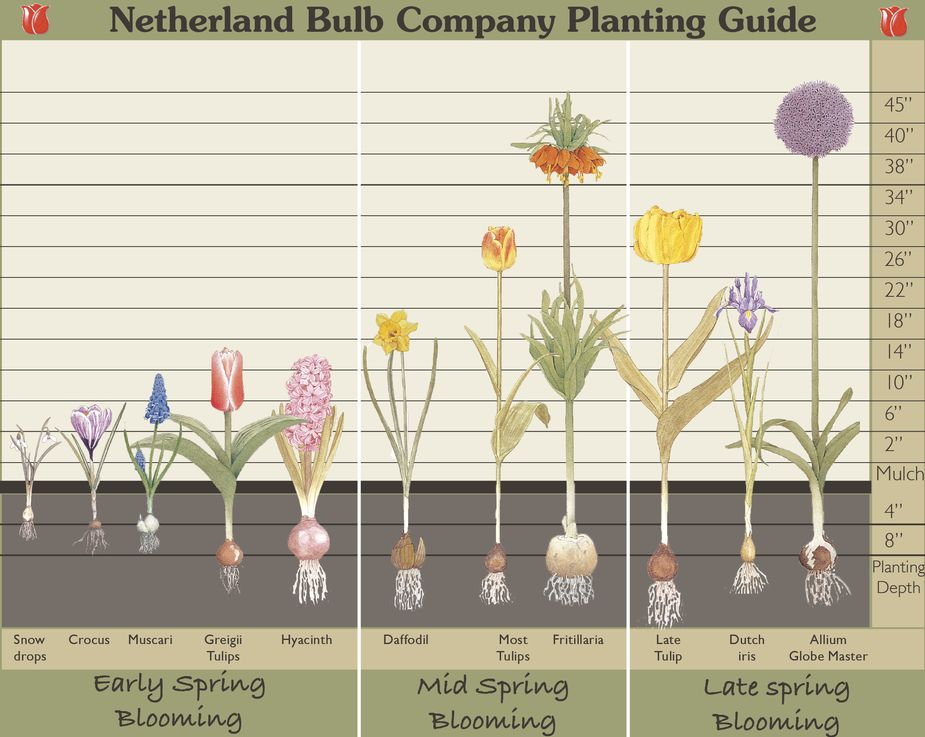 Ginger and Louise Pattern Co Bulb Planting Guide