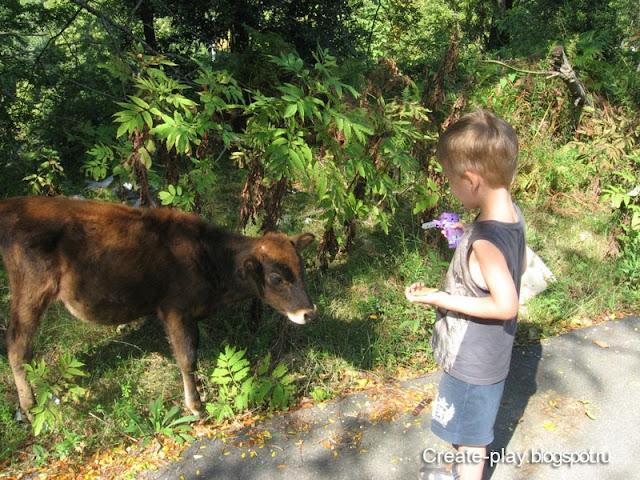теленок в деревне