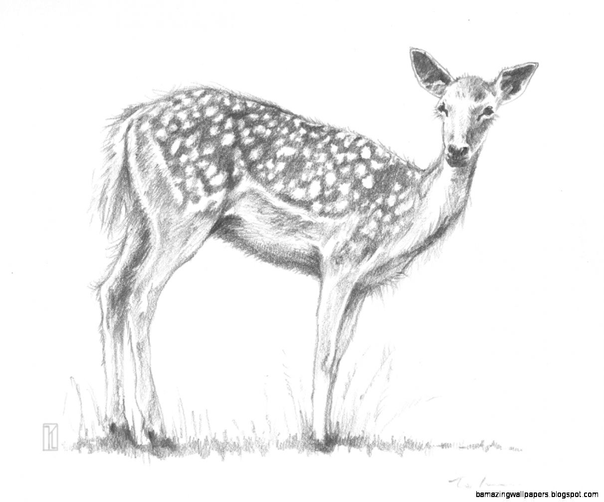 How to sketch animals with drawing animals in pencil